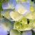 Zdjęcie profilowe Jadwiga